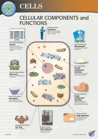 Cellular Components and Functions