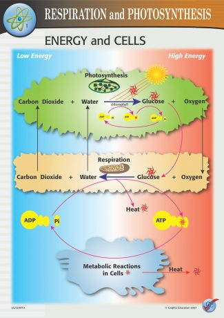 Energy and Cells
